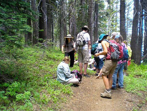 high sierra herb walk image